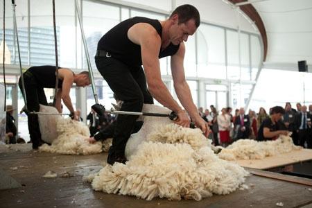 Shear Brilliance - At The Cloud