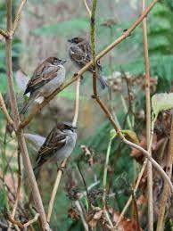 Znalezione obrazy dla zapytania ptaki w ogrodzie