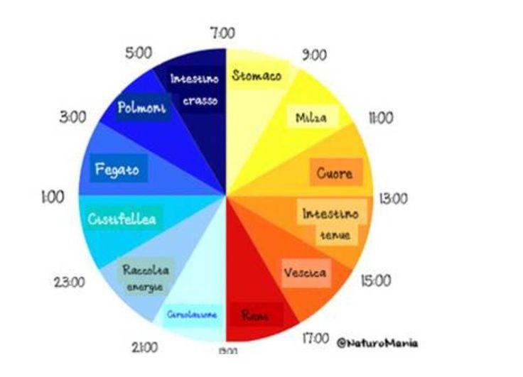 Secondo la medicina cinese ogni organo a il suo orario per essere messo in funzione e dare il 100x100 della sua funzionalità....