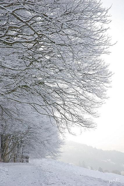 White St. Gallen, Schweiz/Switzerland: Snowy Trees, Winter Landscape, Winter Scene, White Winter, Snowy Forests, Winter Trees, Snowy Christmas, Forests Switzerland, Pure White