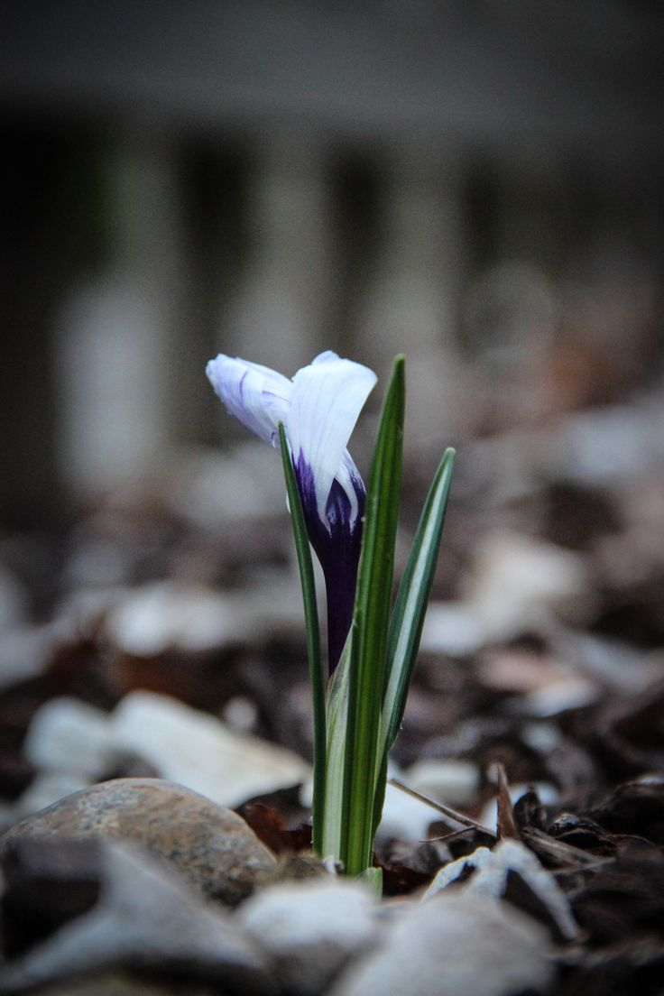 signs of Spring...