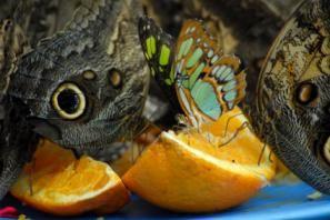 How to attract butterflies: Gardens Ideas, Favorite Paleo, Butterflies Gardens, How To Attraction Butterflies, Paleo Cookbooks, Cookbooks Helpful, Recipe Books, Book Reviews, Gardens Growing