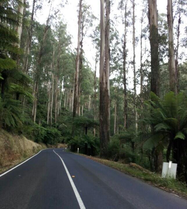The Black Spur....Victoria, Australia
