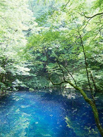 世界遺産 白神山地(青沼)