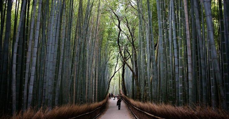O bosque de bambus de Arashiyama � um dos atrativos tur�sticos mais inacredit�veis de Kyoto, no Jap�o. Ao entrar nos corredores cercados pelas alt�ssimas plantas, o visitante se ver� em um ambiente completamente �nico e se sentir� compelido a tirar muitas fotografias. O local, por�m, � visitado por multid�es tur�sticas quase todos os dias. Por isso, n�o � muito f�cil encontrar um espa�o livre para fazer boas imagens