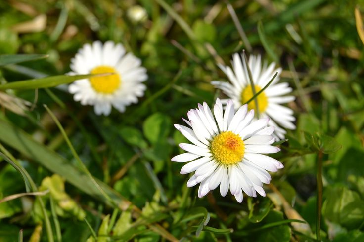 Blütenfeen und Wiesengeister   Kindergarten Ideen