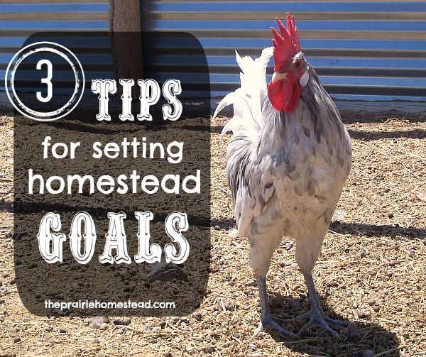 Three Tips for Setting Homestead Goals