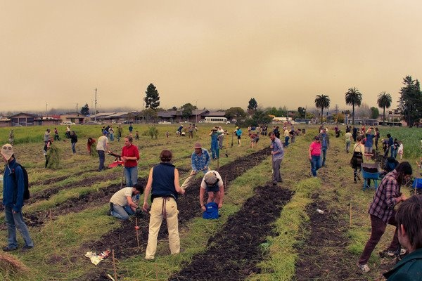 The Real Dirt on Gardening: Occupy The Farm Takes Over Cal Test Field