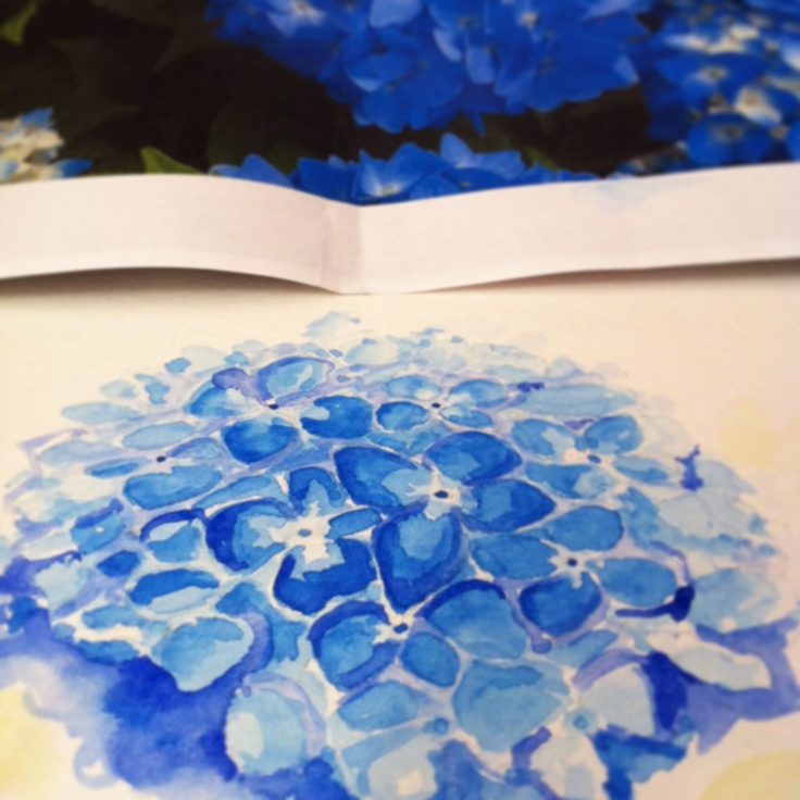 #watercolours #floral #botanicalart #botanical #sketching #flowers #hydrangeas #art #pinstagood #crafty #craftysunday