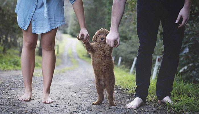 «Это наш малыш!». Пары, уставшие от вопросов про детей, делают милые фотосессии с животными
