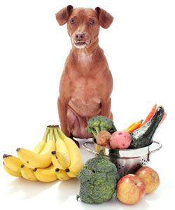 11 safe, good vegetables for dogs, with suggested cooked preparations and portion sizes for treats.