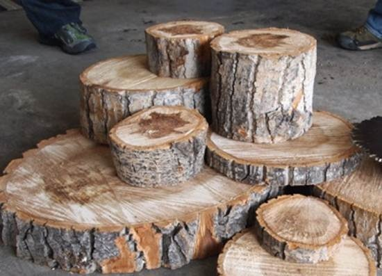 226 Best Tree Stumps Limbs Branches Images On Pinterest