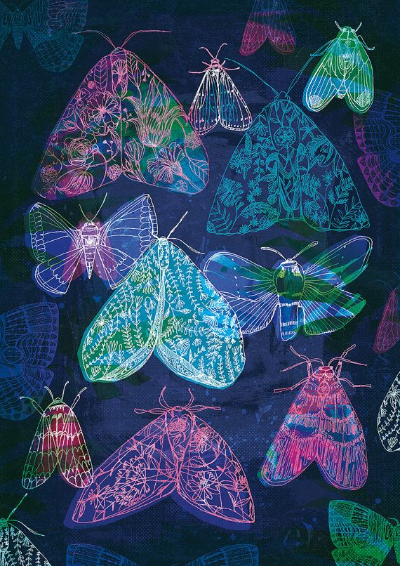 Floral Night Moths Archival Quality Art Print moth illustration