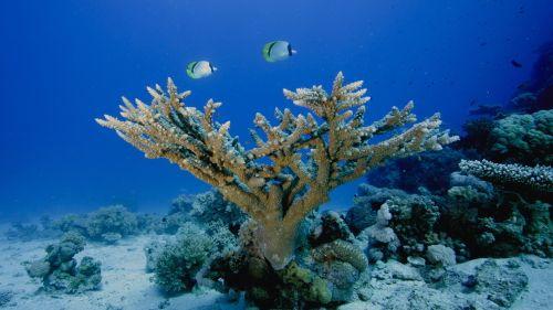 Amazing Underwater Plants Wallpaper (1600x1140) - Desktop ...