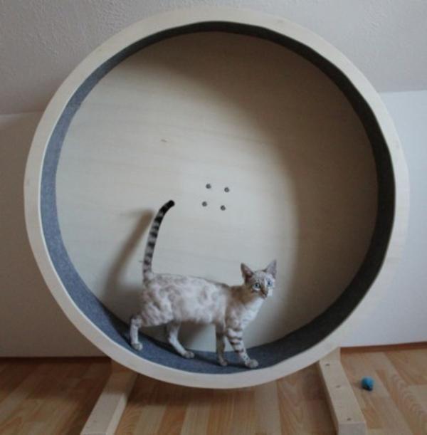bild 4 catwheel katzenlaufrad biedesheim. Black Bedroom Furniture Sets. Home Design Ideas