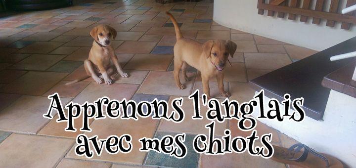 Apprenons l'anglais avec mes chiots : www.FunandEnglish.com l Formation d'anglais en ligne FUN