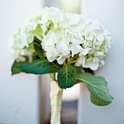 White Hydrangea Bouquet | White and green hydrangeas wrapped in gold ribbon make for an understated, yet stunning bouquet. | SouthernLiving.com