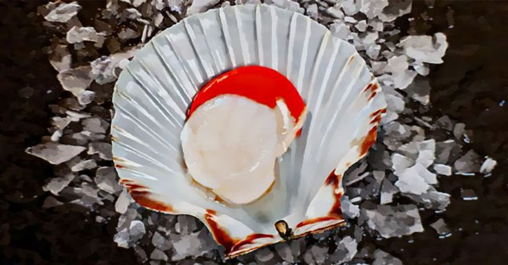 can pregnant women eat scallops is it safe  scallops