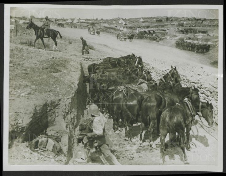 """Photograph of horses in dug outs at Sedd-el-Bahr camp (soldier in foreground removing tack). The caption on the reverse reads """"Even horses have their dug-outs, though these are not roofed in. No 2614. From a collection of official photographs of the Dardanelles Expedition, 1915-1916."""