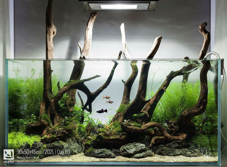 1032 Best Cichlids Images On Pinterest Fish Aquariums