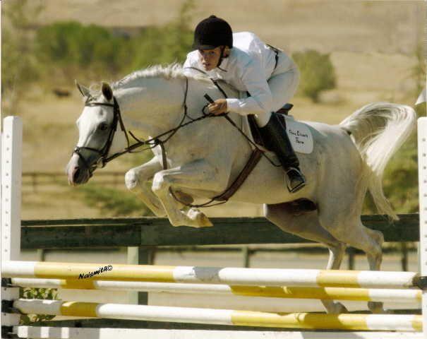 Top 25 ideas about Arabians on Pinterest   Arabian horses ...