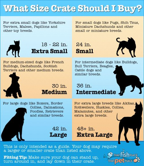 crate size for your dog