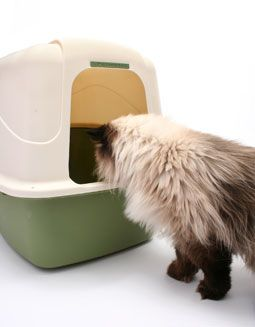 4 tips for a fresher smelling cat litter box - CatChannel