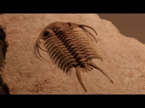 The Secrets of Fossils