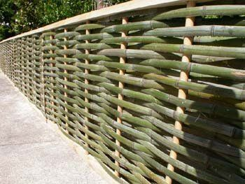 Bamboo fencing - Put up while it is green and allowed to dry out