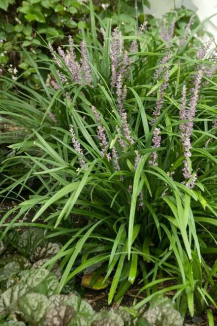 easy shade plants 55 best ground cover images on pinterest garden garden paths