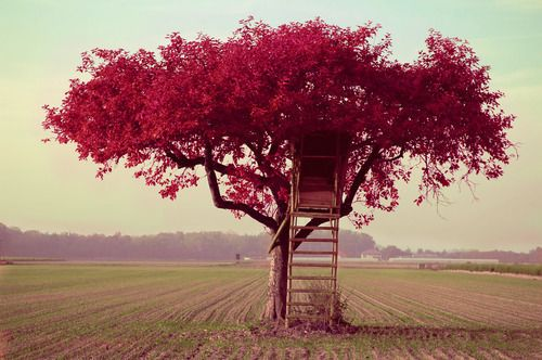 red treeHiding Places, Red, Dreams, Pink House, Trees Forts, Trees Of Life, Treehouse, Trees House, Blossoms Trees