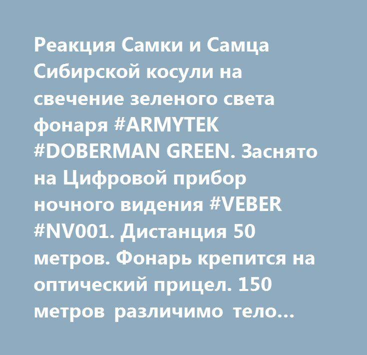 Реакция Самки и Самца Сибирской косули на свечение зеленого света фонаря #ARMYTEK #DOBERMAN GREEN. Заснято на Цифровой прибор ночного видения #VEBER #NV001. Дистанция 50 метров. Фонарь крепится на оптический прицел. 150 метров различимо тело животного.