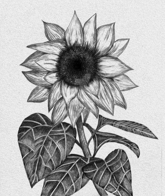 Gambar Sketsa Bunga Indah