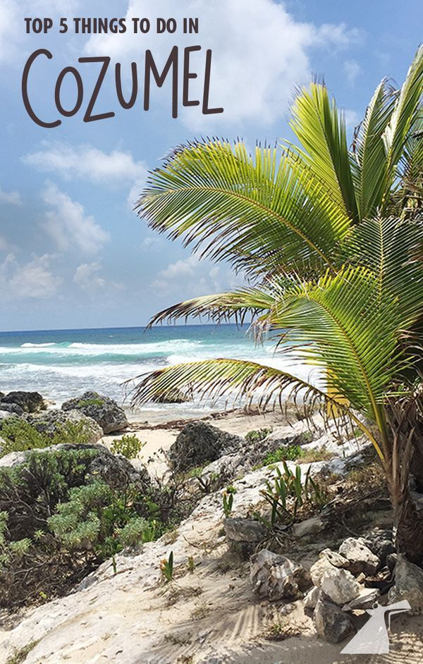The fun you can have in Cozumel, Mexico is endless! But here are 5 activities you just can't miss.