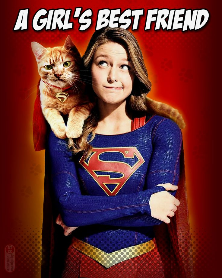 Streaky the Supercat and #Supergirl (Melissa Benoist) -- purrfect..!