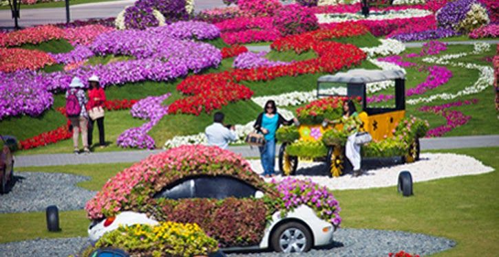 sarkar zone world best and big flower garden sarkar zone