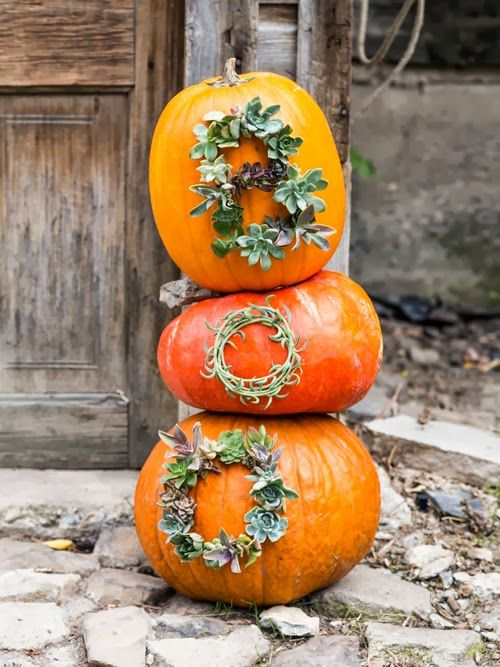 Succulent worded pumpkins