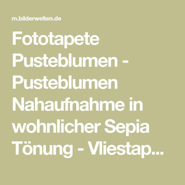 Fototapete Pusteblumen - Pusteblumen Nahaufnahme in wohnlicher Sepia Tönung - Vliestapete Breit