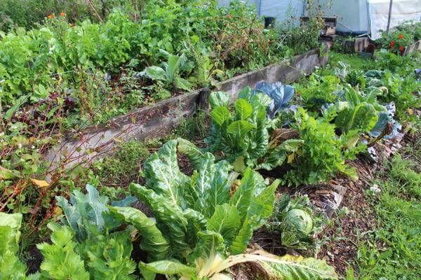 25 best images about jardin potager d 39 hiver on pinterest planters vegetables and livres. Black Bedroom Furniture Sets. Home Design Ideas