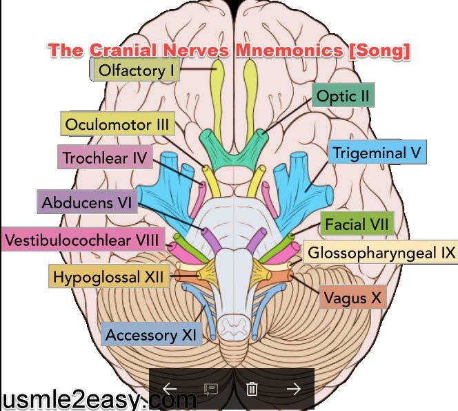 How to Remember The Cranial Nerves Mnemonics [Song] - http://usmle2easy.com/remember-cranial-nerves-mnemonics-song/