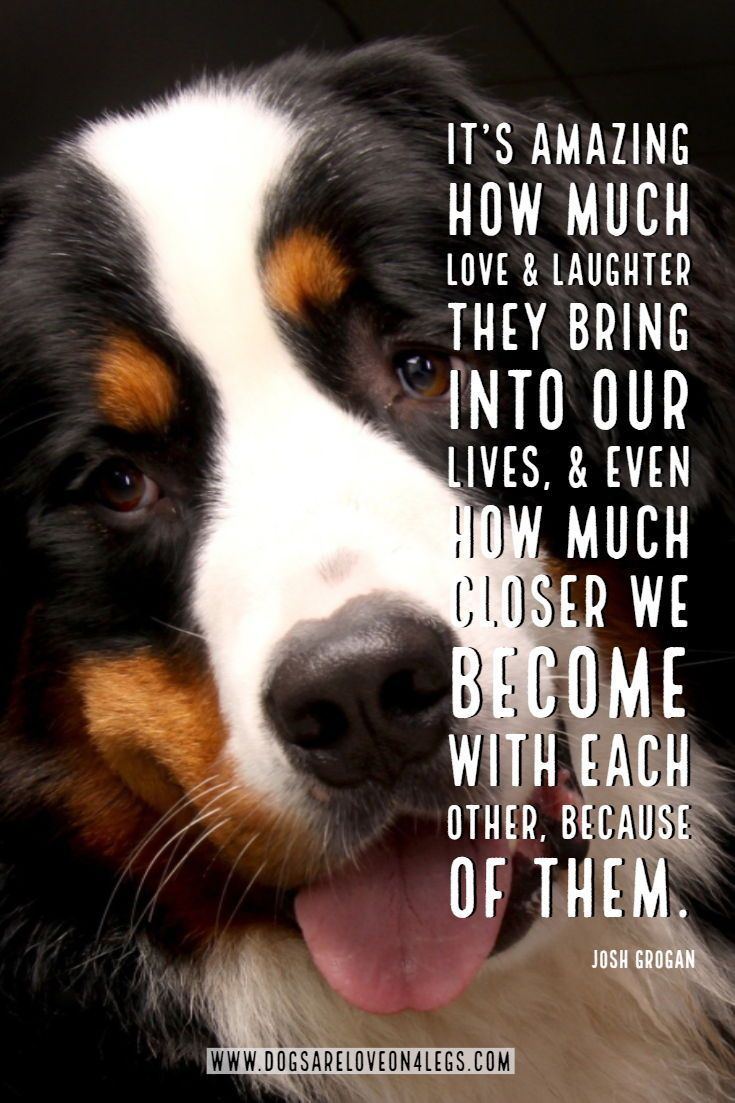 Dog Quote It S Amazing How Much Love Laughter They Bring Dog Dog Quotes Inspirational Quotes F Dog Quotes Inspirational Dog Quotes Funny Dog Quotes