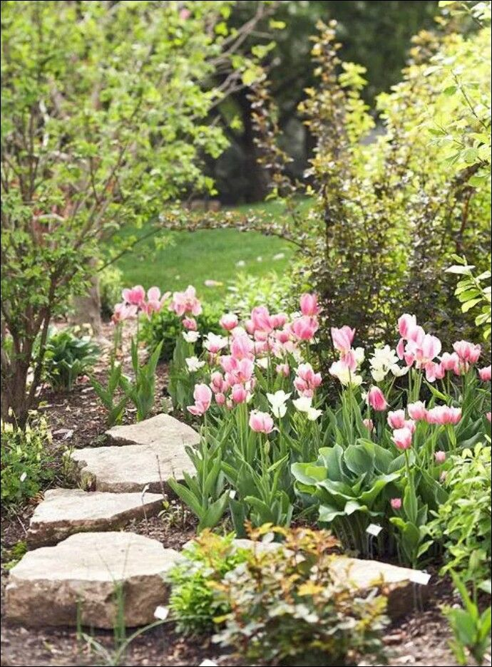 Walkway with tulips
