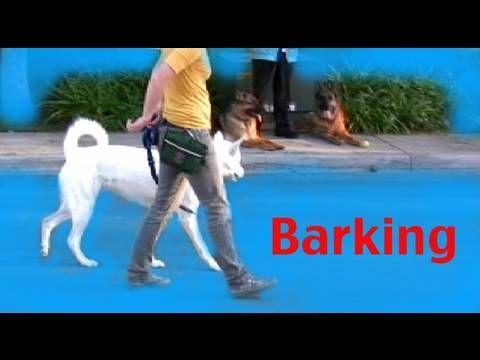 Stop barking on a walk - Barking- Episode 3 Dog training - YouTube