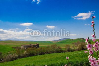 Spring landscape in Val d'Orcia - Tuscany. #Flowers #Spring #Tuscany #Val_d_Orcia #Pienza #Hills #Travel #Tourism #ambient #Season #Wallpapers #Background #Rural #Pienza #Siena