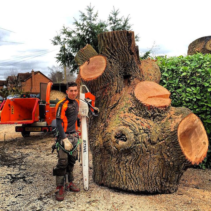 tree surgeon coventry, tree removal coventry