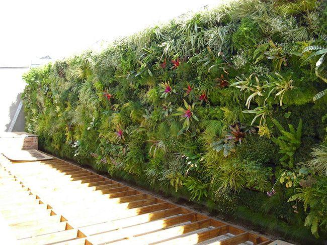 Jardins verticais são alternativas para imóveis com pouco espaço