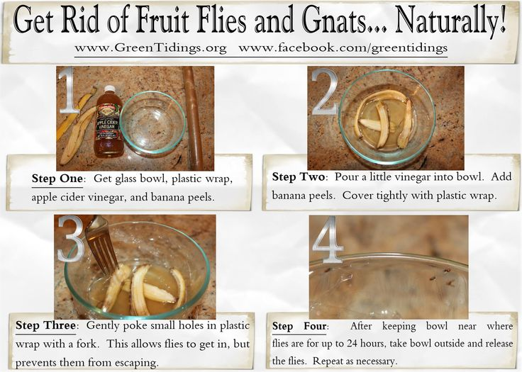 Get Rid Gnats Naturally