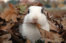 Who loves playing in the leaves?!?!? #Bunny #Cute #Rabbit