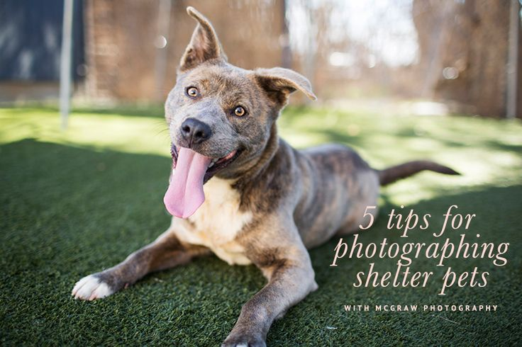 Tips on Photographing Shelter Pets with McGraw Photography | Pretty Fluffy | Pretty Fluffy