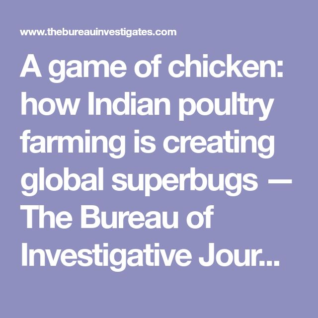 A game of chicken: how Indian poultry farming is creating global superbugs — The Bureau of Investigative Journalism